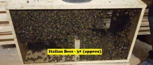 Italian Bee Package - 3# (tax-exempt)